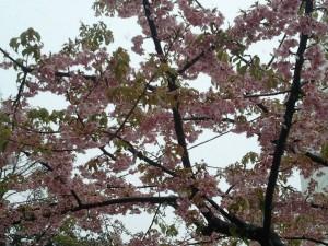 2011-03-07_094325.jpg