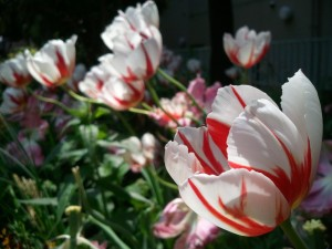 2012-04-29_115620.jpg